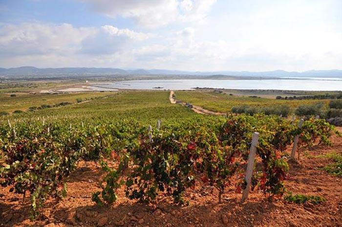 Sardegna, profumo di mosto e vino
