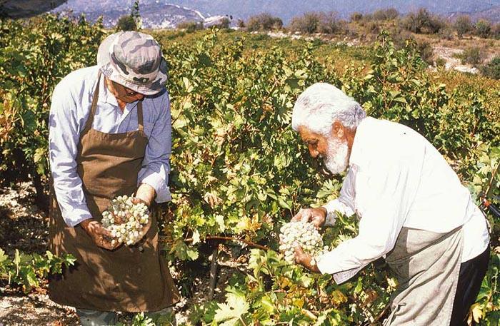 Cipro festeggia il suo antichissimo vino