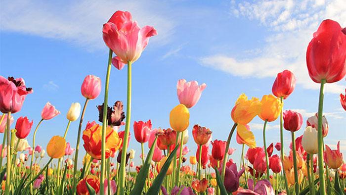 L'Olanda dà il via alla primavera