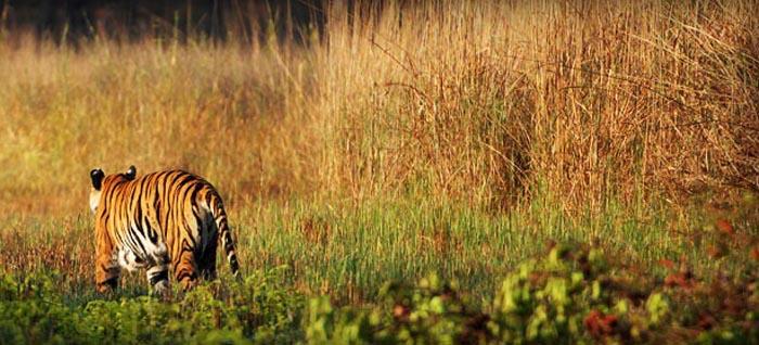 India, un safari nella giungla tra yoga e cucina