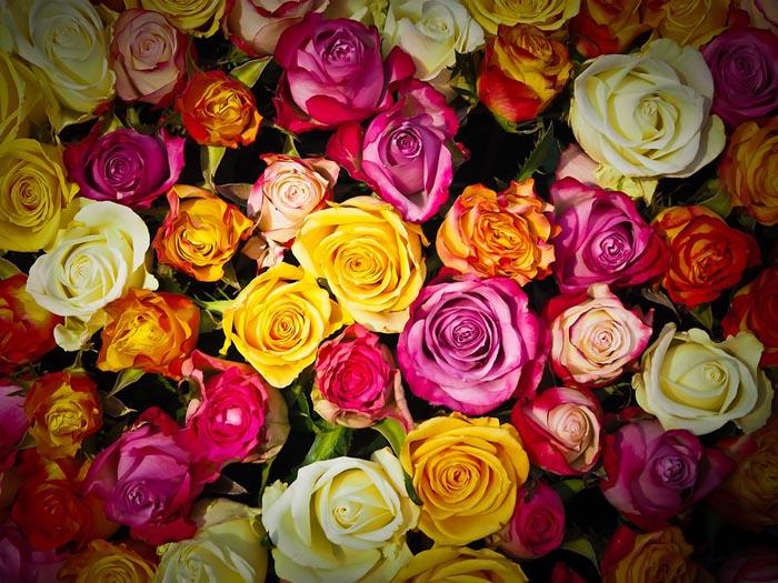 Bellezza di primavera, nel nome della rosa