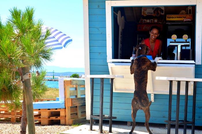Croazia, e i cani vanno al bar