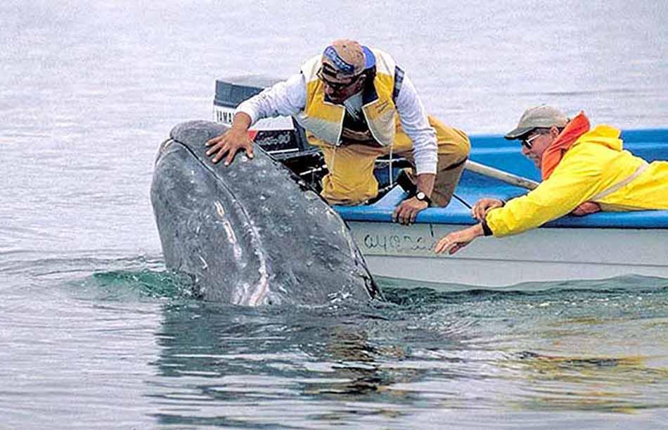 Baja California, accarezzando le balene