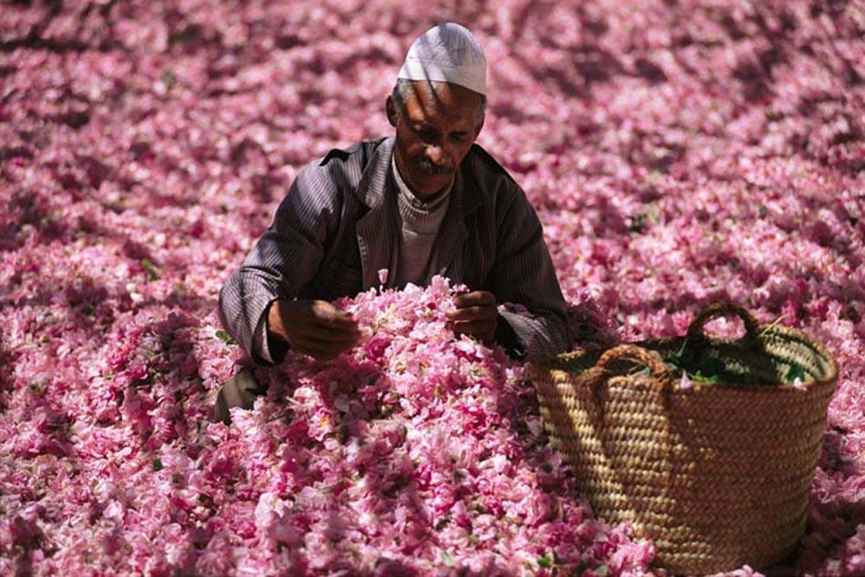 Oman, il tempo delle rose