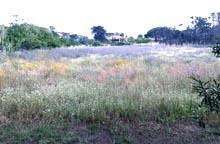 Porquerollles campi di fiori