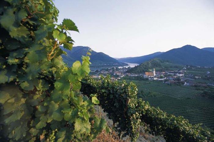 Bassa Austria, ecco l'Autunno del vino