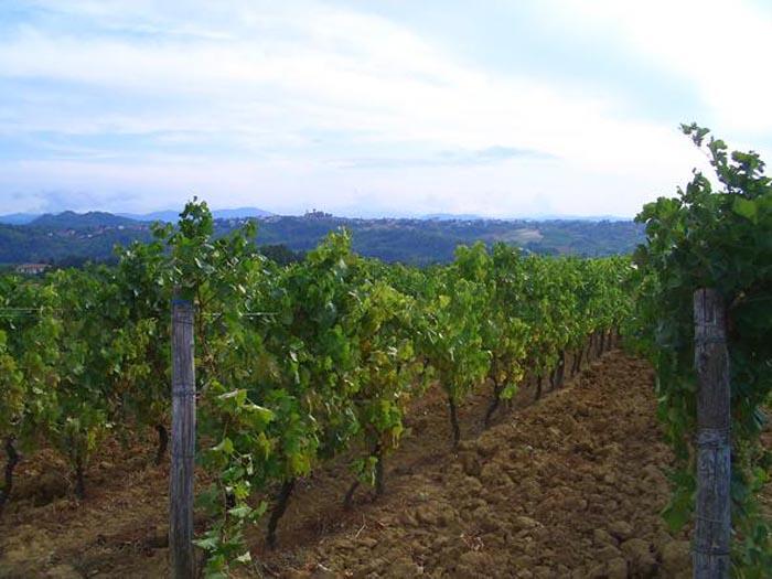 Gavi, una Via del Vino tra boschi e delizie