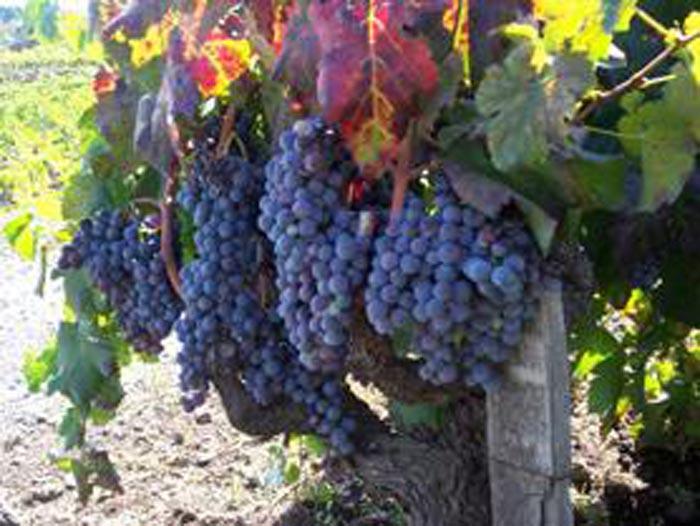 In viaggio tra le vigne con Wine & Tours