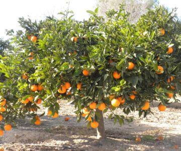 arance della salute di Airc